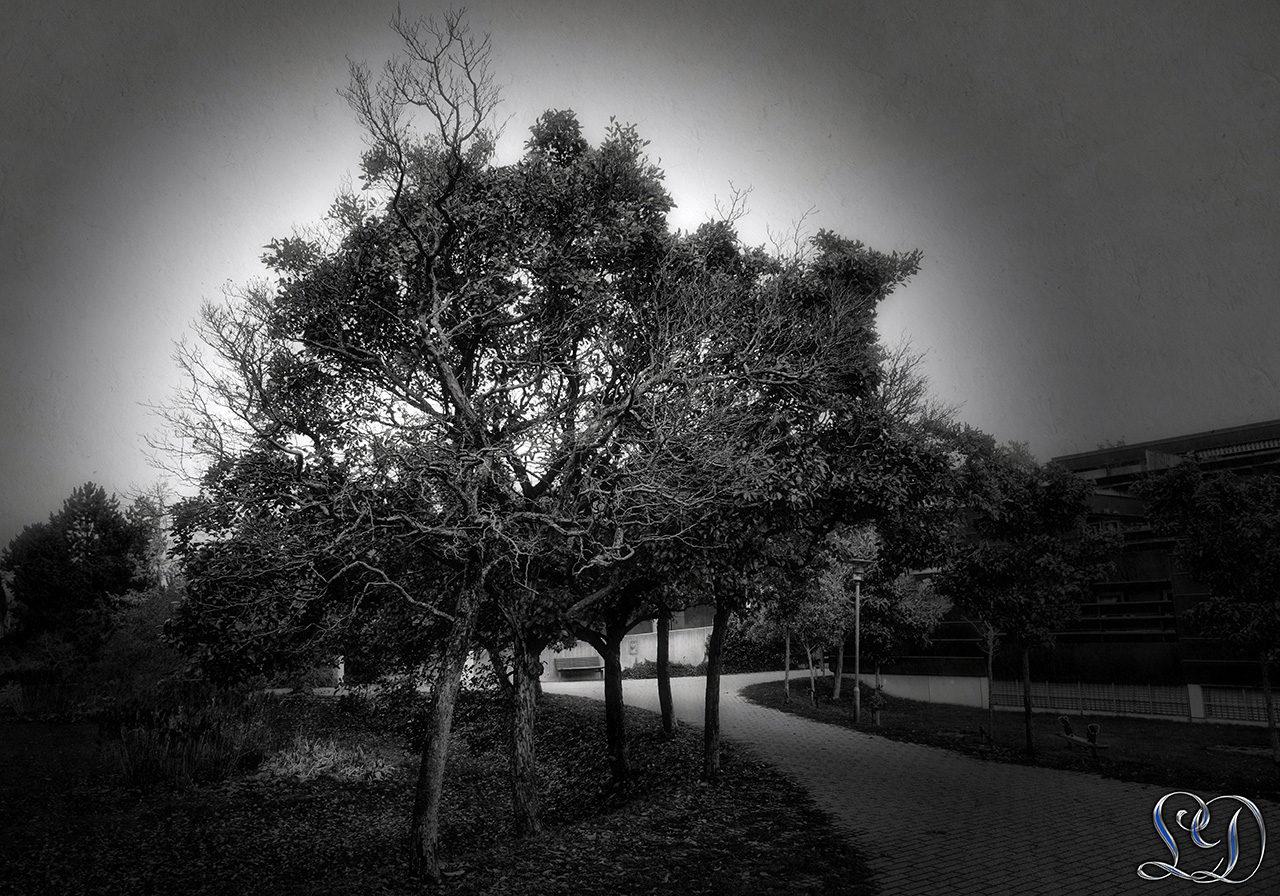 Sort & Hvid med spot rettet mod træet