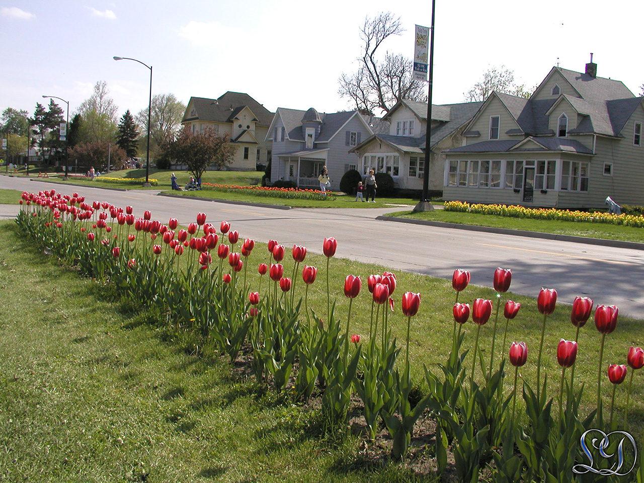 Tulipan festival Pella Iowa originalt billede